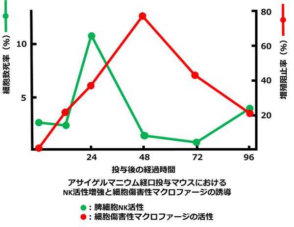 アサイゲルマニウム経口投与マウスにおけるNK活性増強と細胞障害性マクロファージの誘導