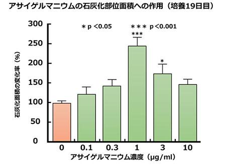 アサイゲルマニウムの石灰化部位面積への作用