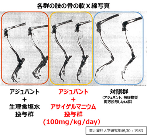 各群の肢の骨の軟X線写真
