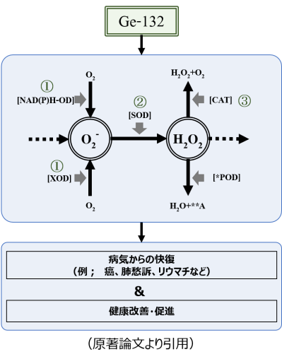 WP_サル肝臓論文-2